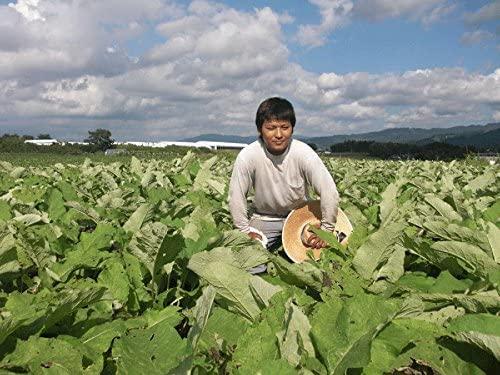 すずのね茶園 ごぼう茶の商品画像6