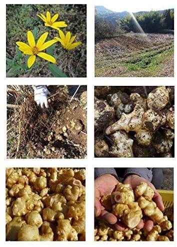 Eveway(エヴァウェイ) ぐんぐん イヌリンの力 菊芋の粒の商品画像2