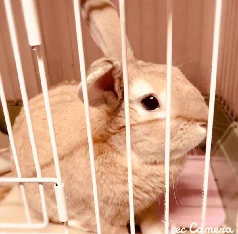 うさぎ|Rabbit