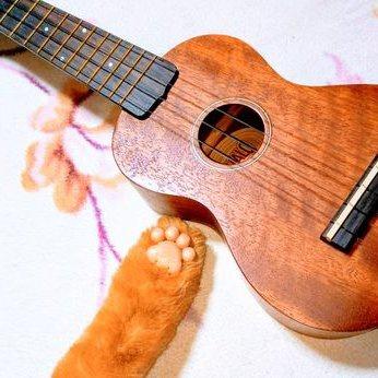 稲猫(とうびょう) / 女性のプロフィール画像